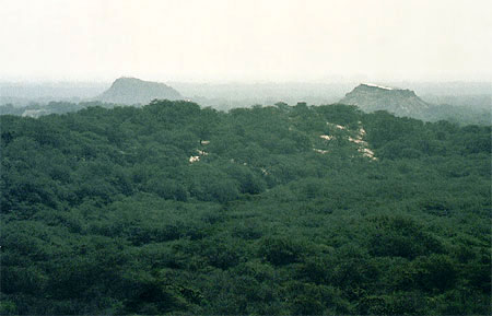 20051229055417-bosque-pomac-se-ven-dos-piramides-sican.jpg