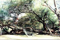 Riqueza de biodiversidad de Bosque de Pomac